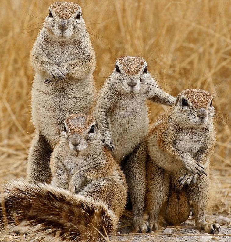 Прикольная картинка группы животных, для ватсапа доброе