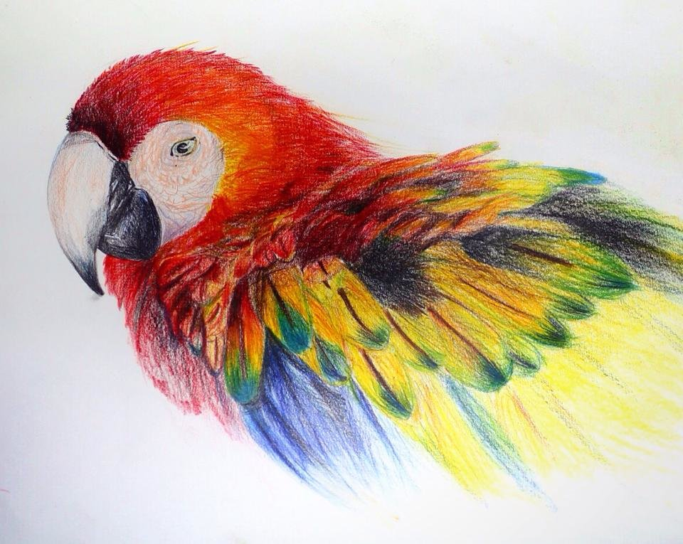 Прикольные картинки рисованные карандашами цветными, открытки