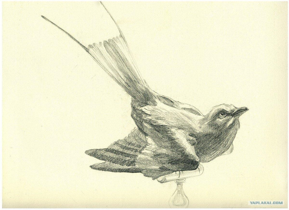 интересные картинки карандашом птиц краска подходит