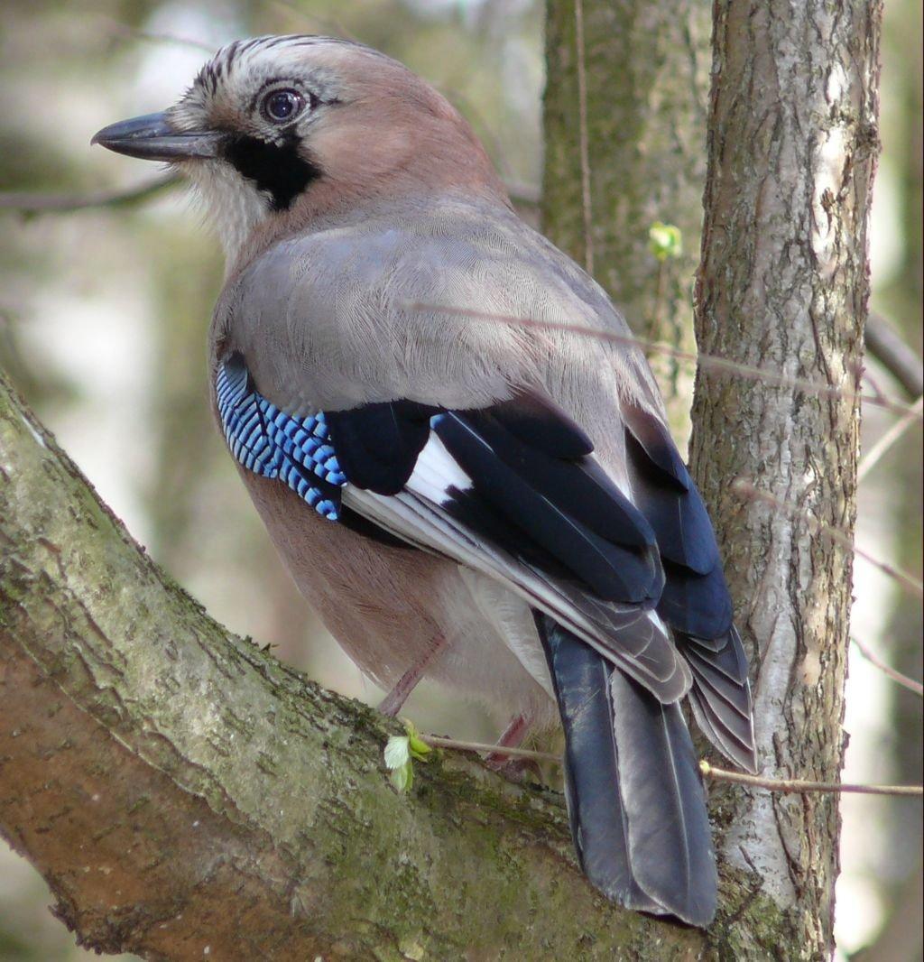 птицы спб фото с названиями побольше