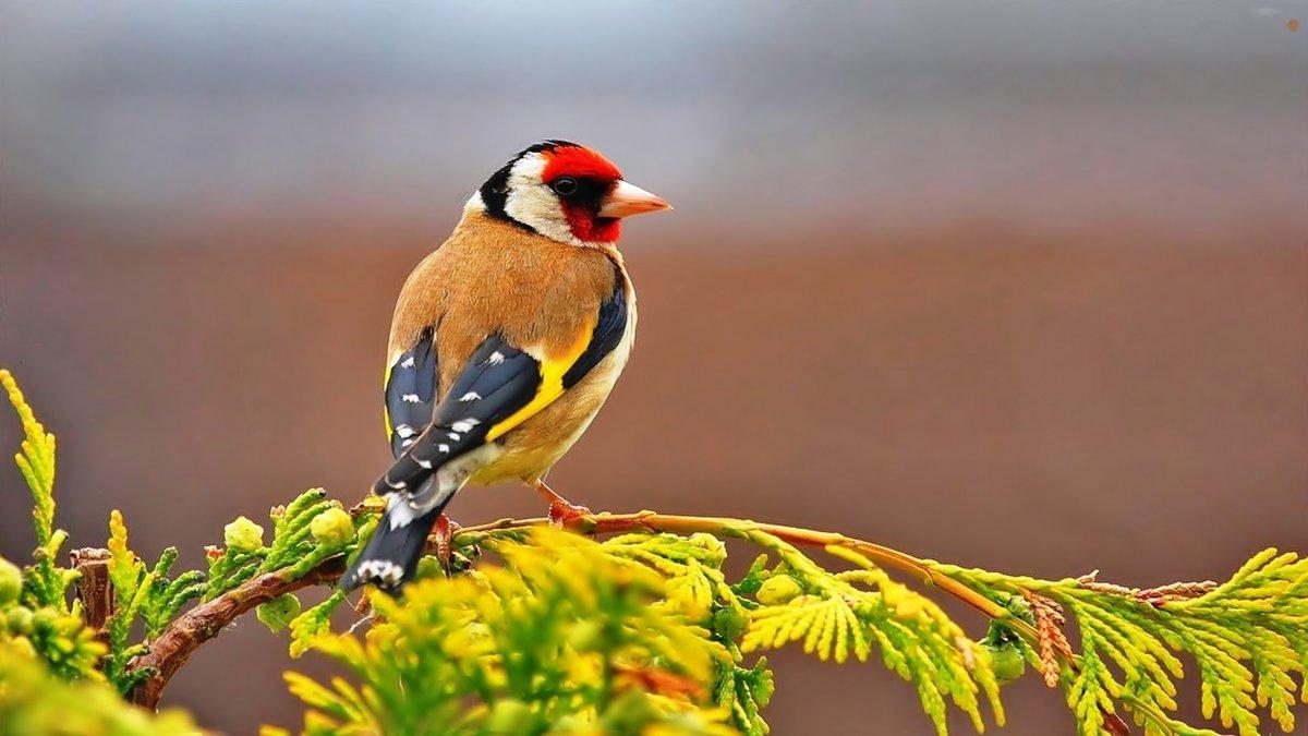 картинки птиц года наличии