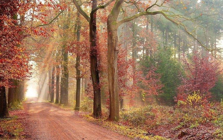 Яркие краски аллеи в осеннем лесу