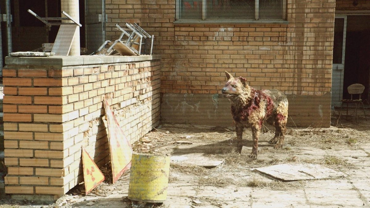 Картинки чернобыля зона отчуждения собаки
