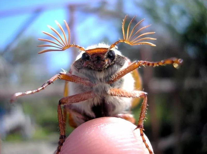 Для, жуки в картинках смешные