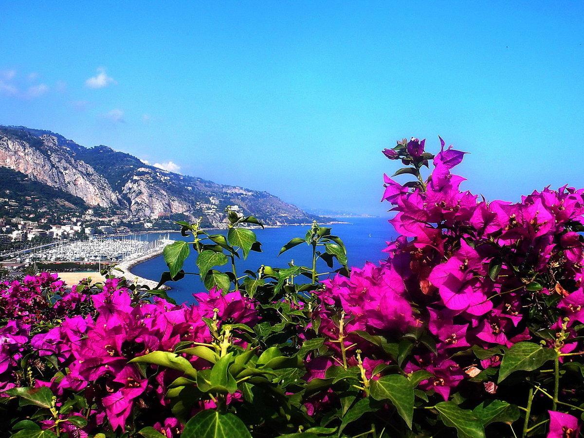 картинки море лето цветы природа на рабочий стол