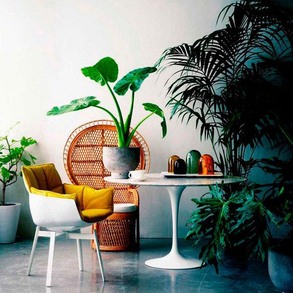 интерьер с комнатными растениями в картинках с названиями