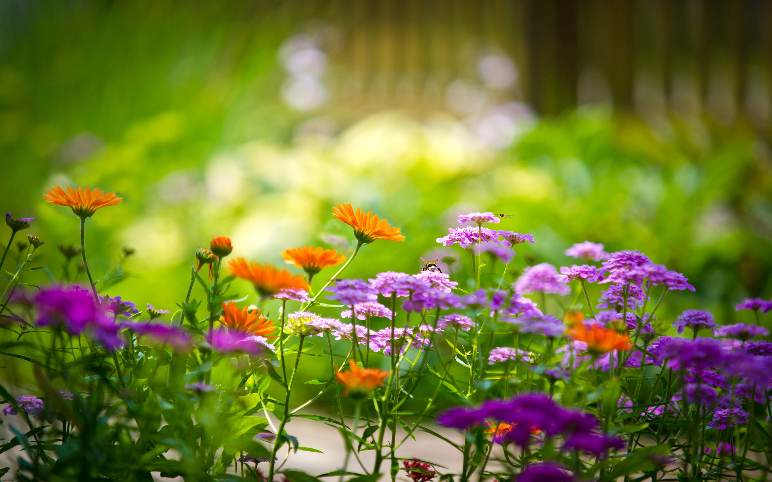 фото лето природа