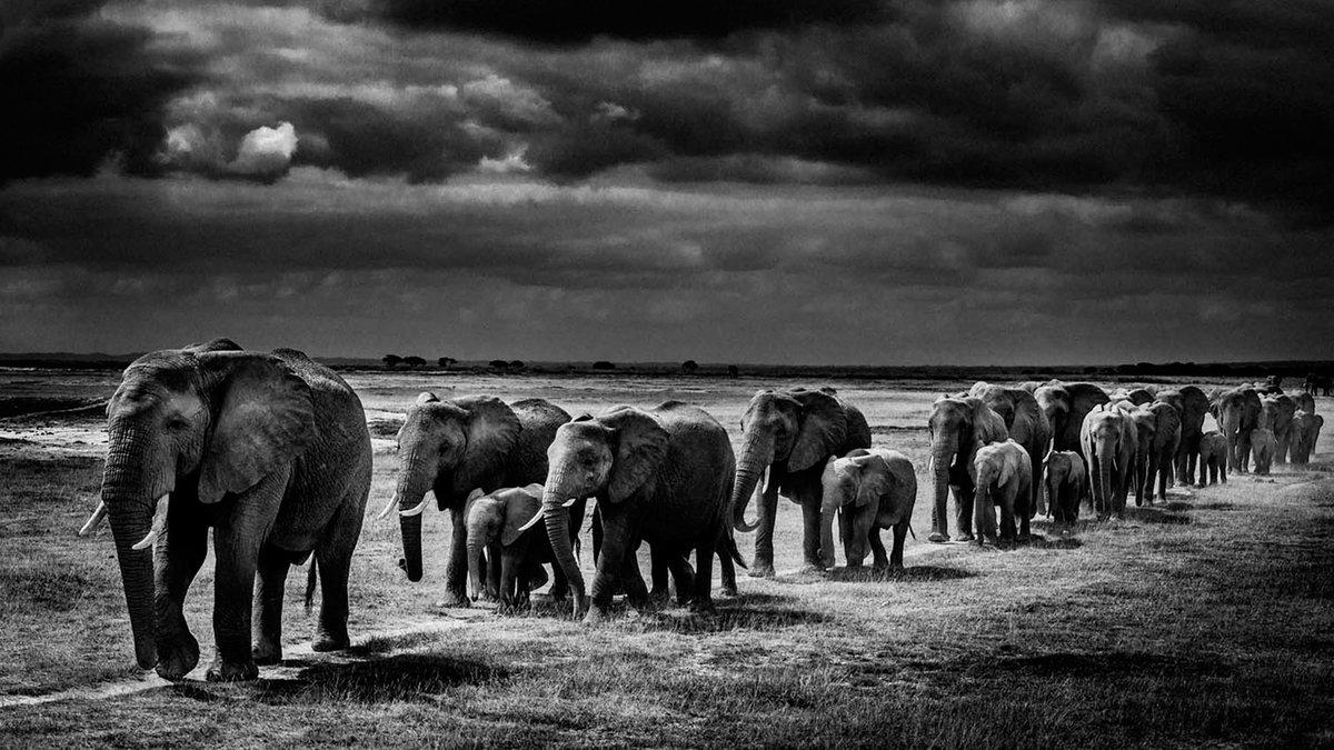 лучшие черно белые фото животных первые два