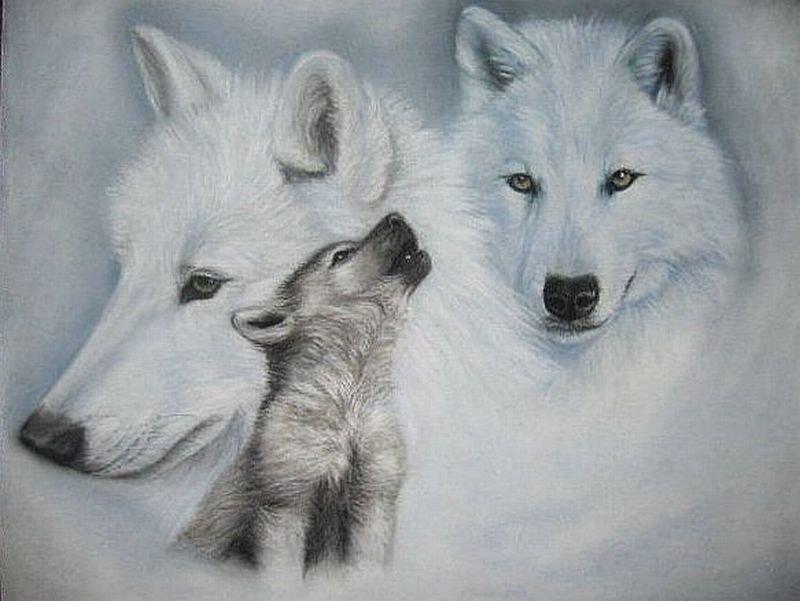 Рисованные картинки с волчатами