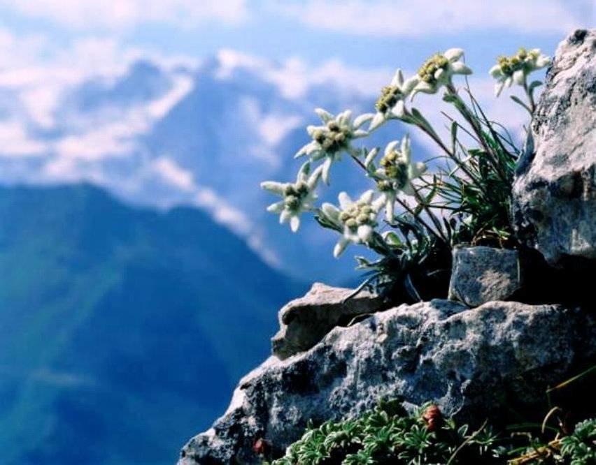 Картинка с горами с днем рождения, открытки для