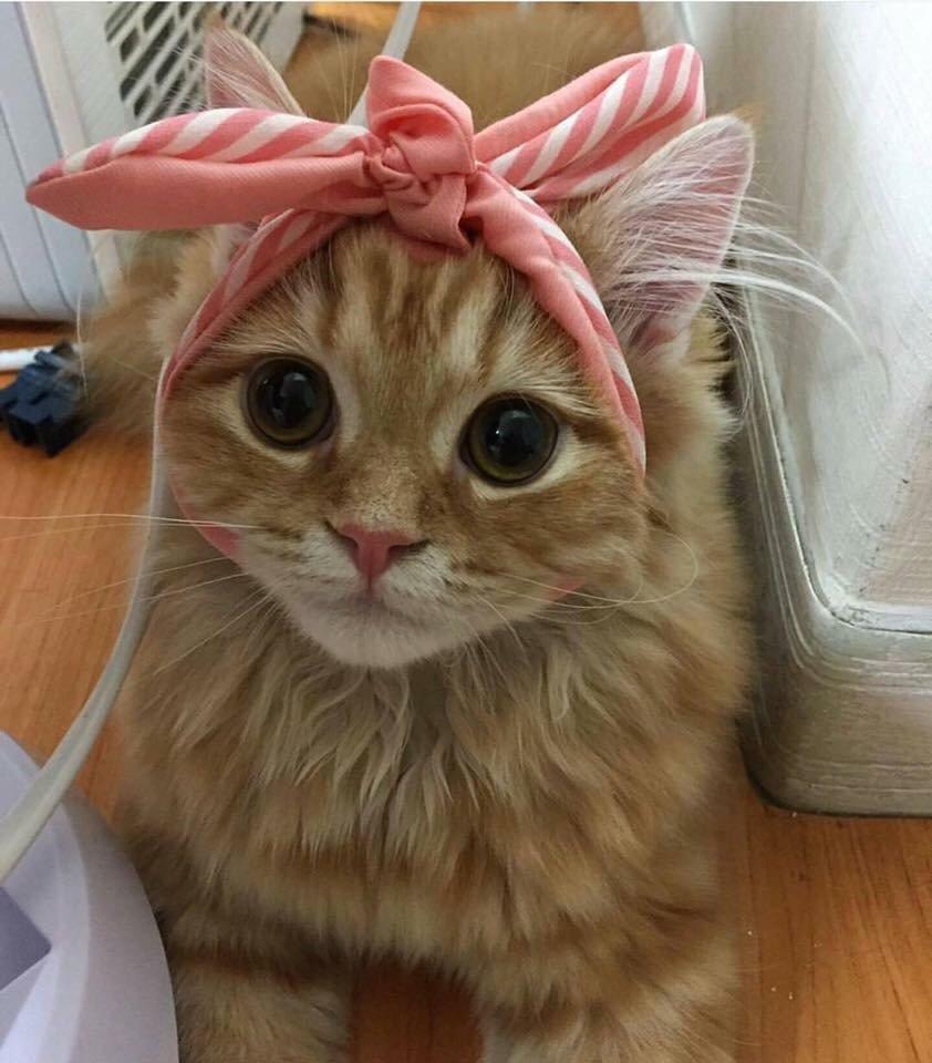 Кот с повязкой на голове