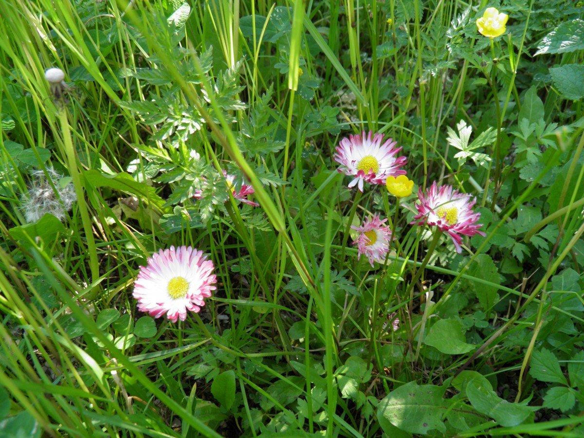 картинки дикорастущих трав проверить