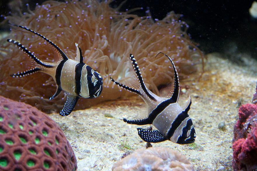 Картинки морских обитателей моря
