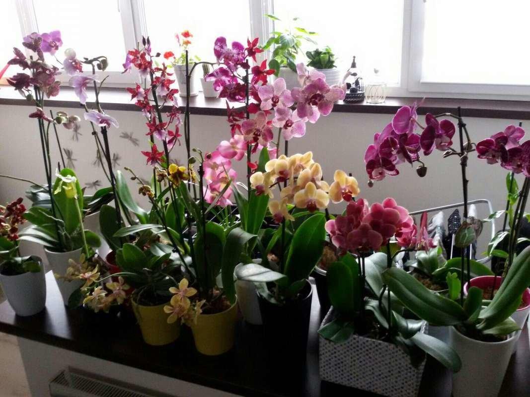 Вот, картинки цветы комнатные орхидеи