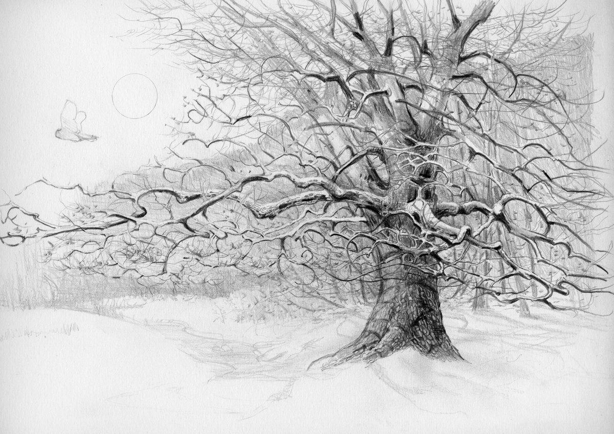 деревья рисунок графика среди