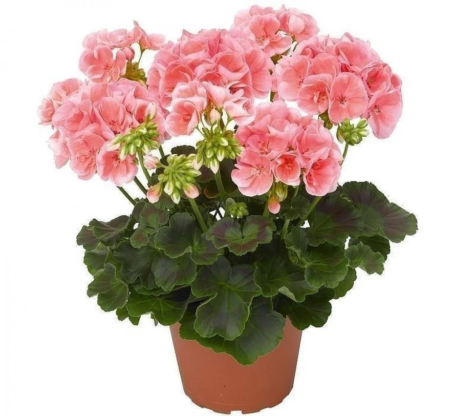 Комнатные растения открытки, марта коллегам