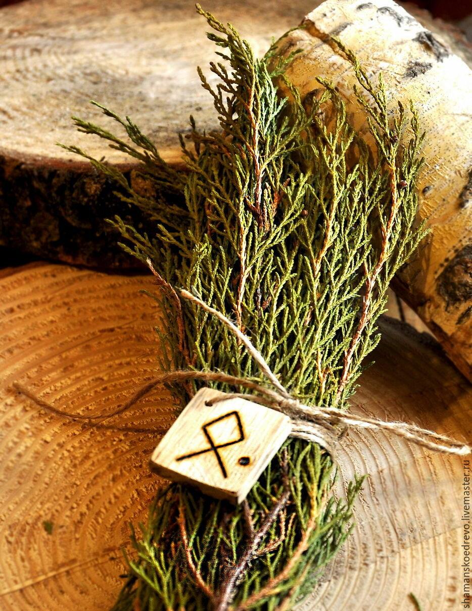 можжевельник - сильный оберег для дома, для здоровья и защиты