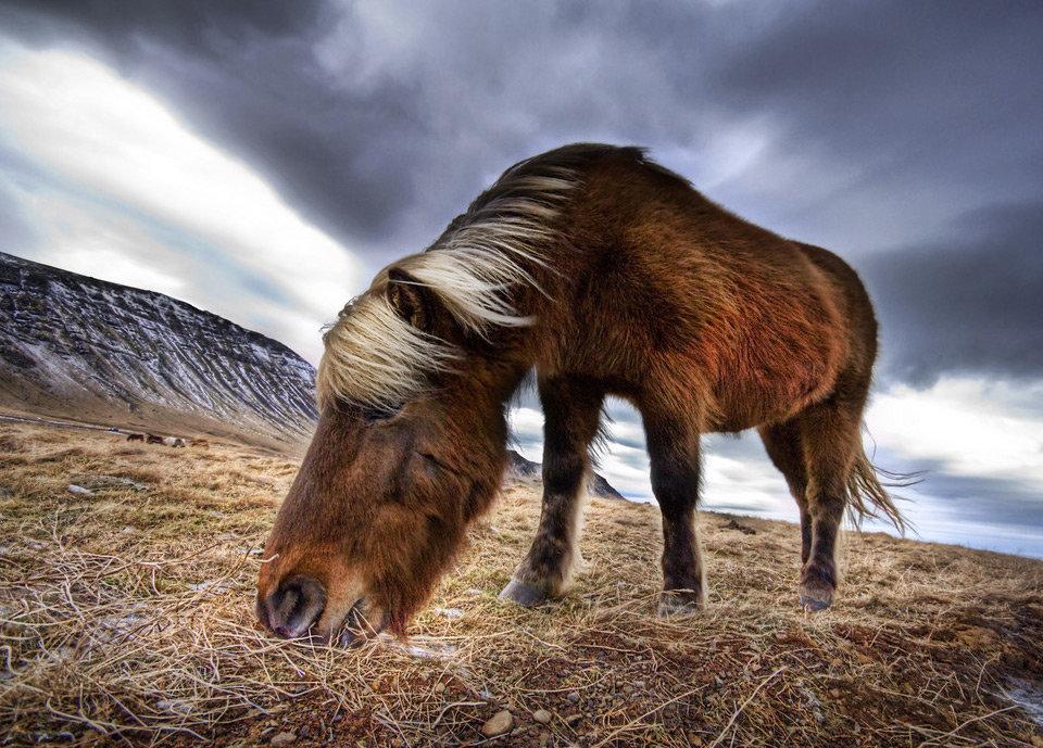 Дикая природа. Исландия.