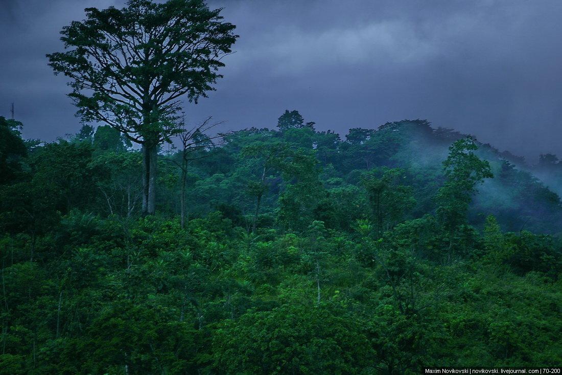 Картинки тропики дождь