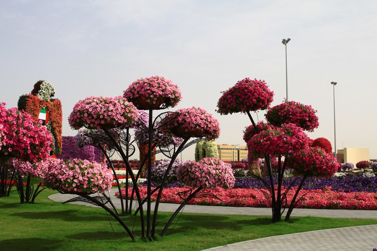 парки цветов мира фото того