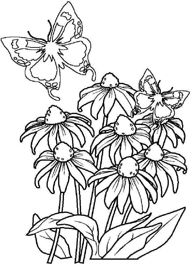 Раскраски с цветами для детей, открытка лилии