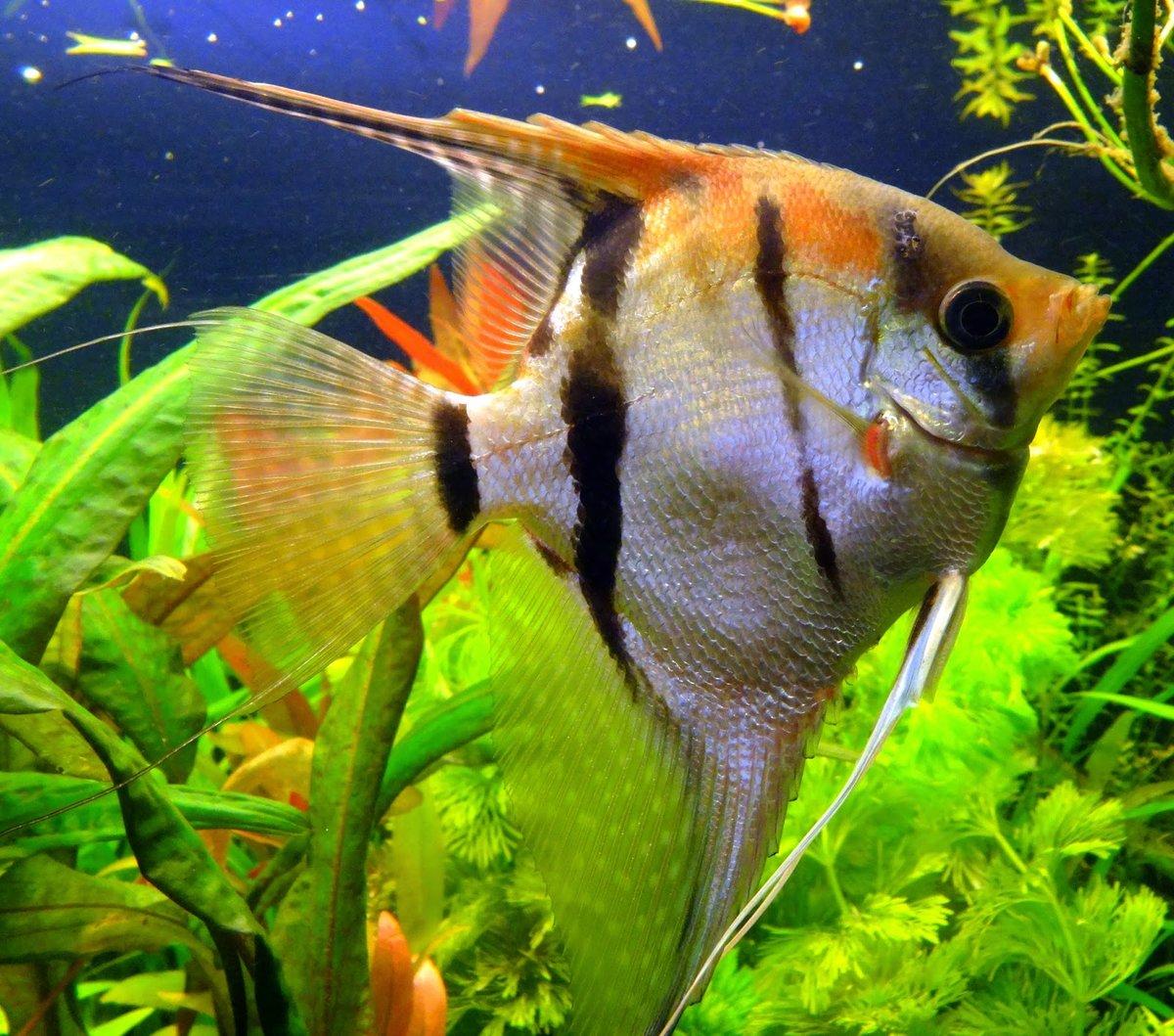 Смотреть картинки рыбки аквариумные