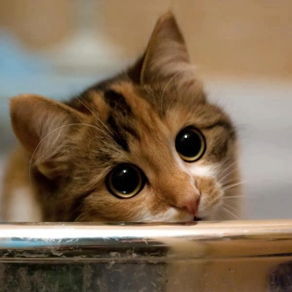 Картинки я скучаю котик, для
