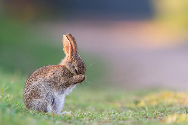 картинка милый зайчик