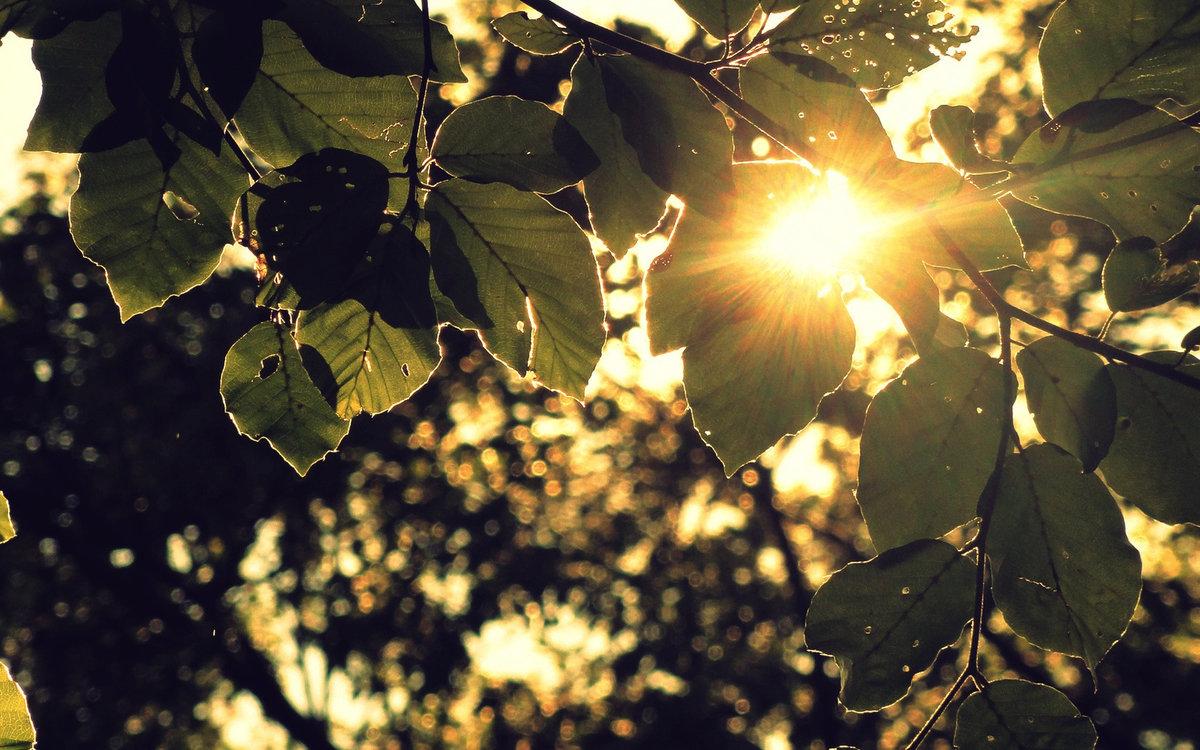 Картинки лучи солнца сквозь листву, нарисовать