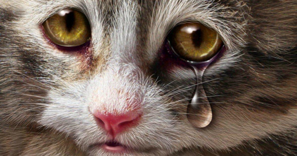 Дне матери, открытки котенок плачет