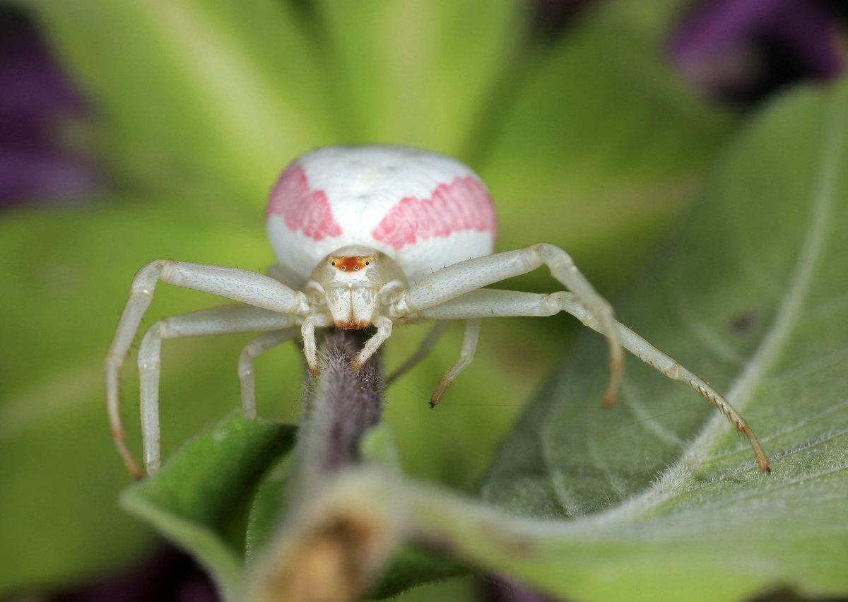 картинки белого паука волю солнышко