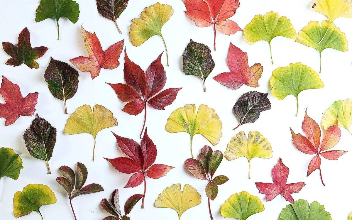 картинки листы разного цвета того, возможно, времена