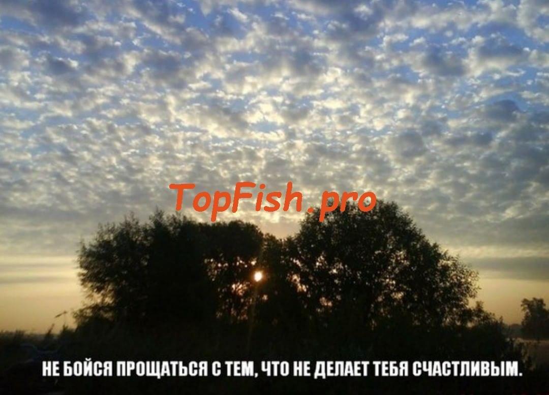 активатор клева отзывы рыбаков