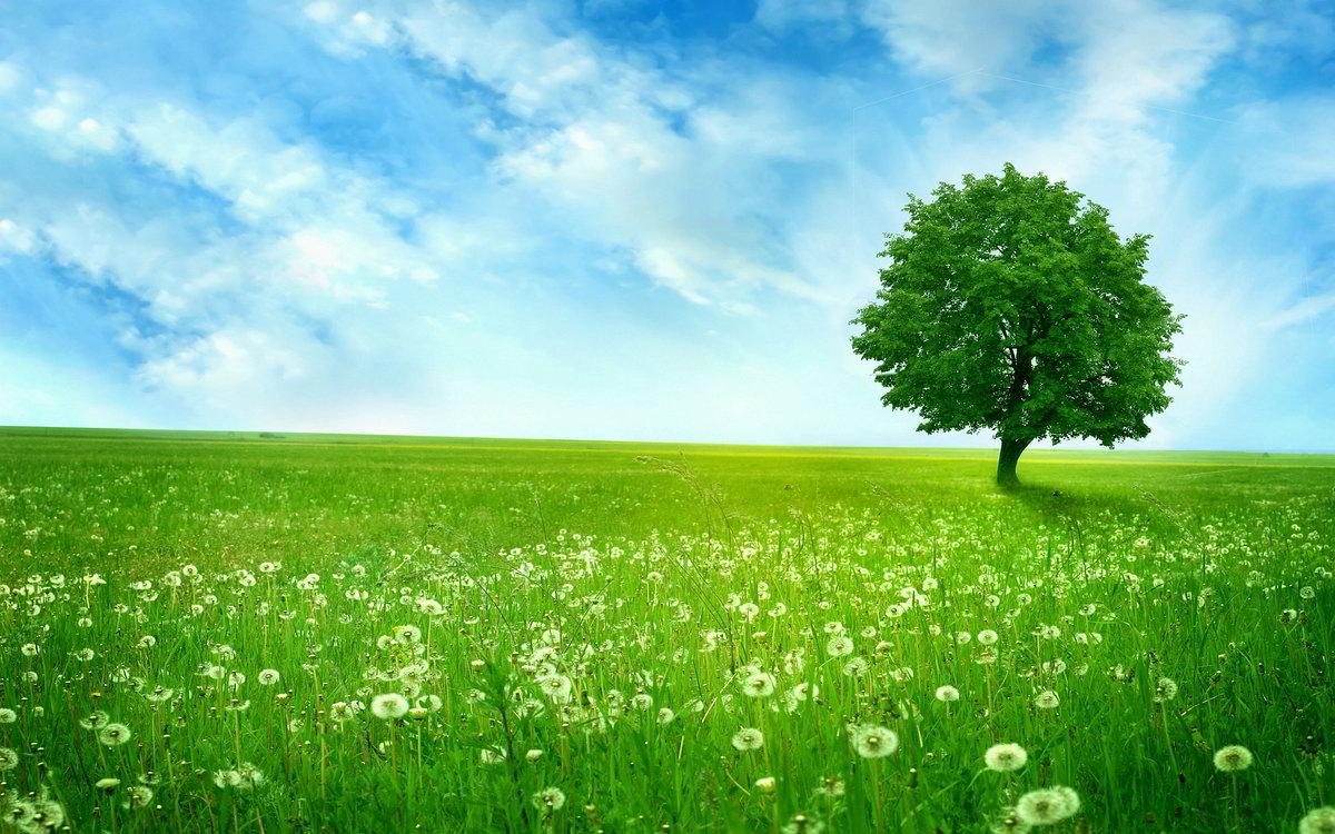 Поздравительная открытку, картинка летняя полянка