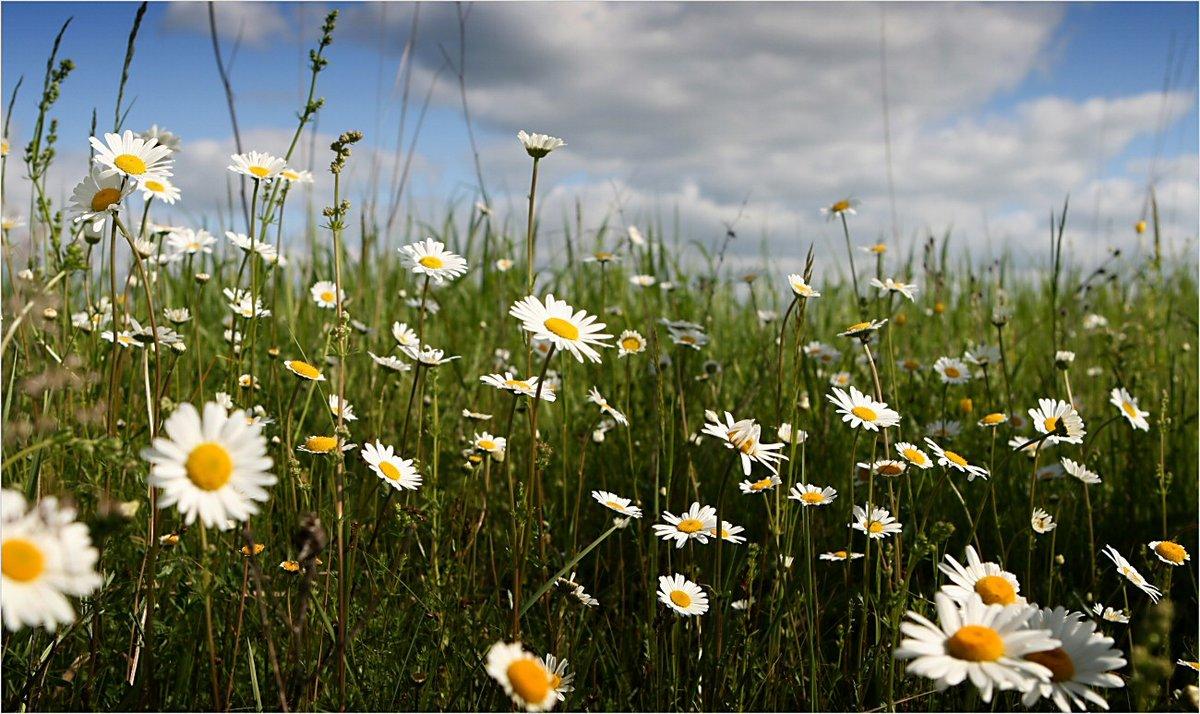 летняя природ