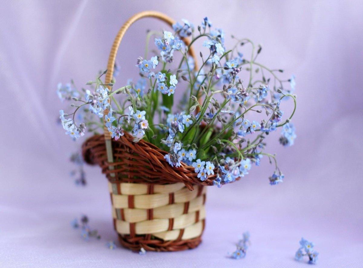 Букет из незабудки цветочный магазин, долларов красивые