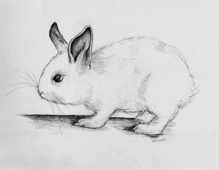 Картинки нарисованные зверей карандашом