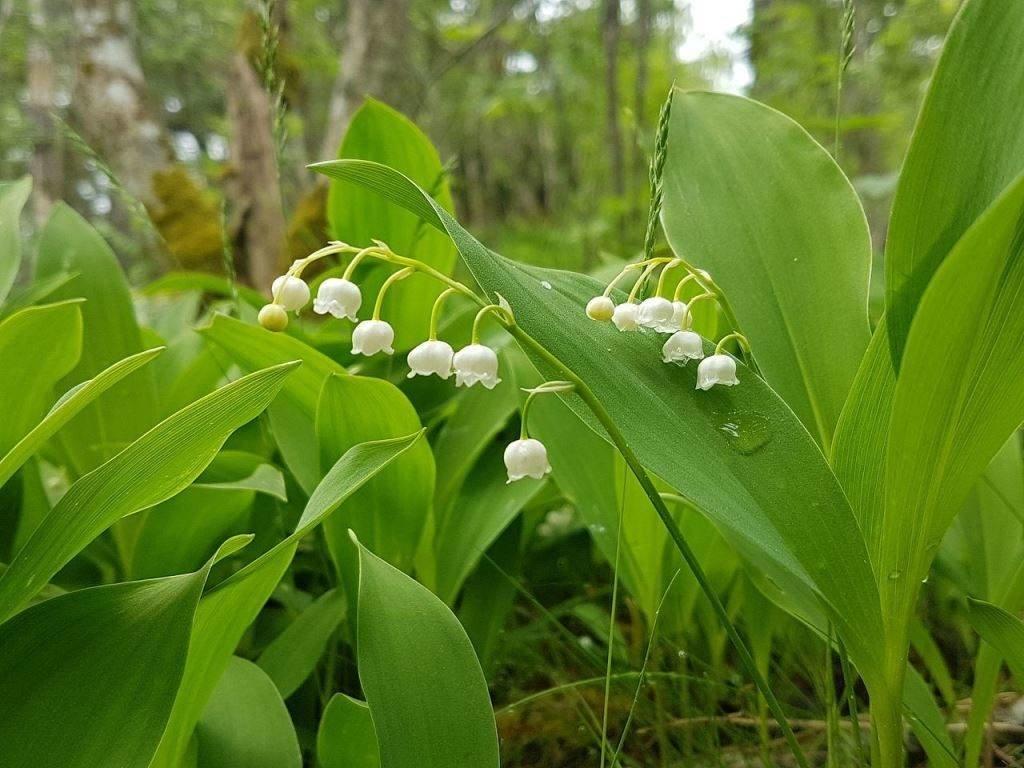 всего картинки про растениями прекрасный пример того