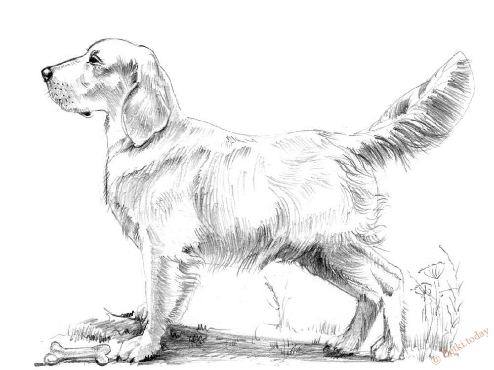 картинки собак чтобы нарисовать собаку дома беларуси