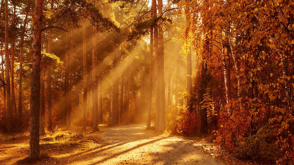 чудесный свет