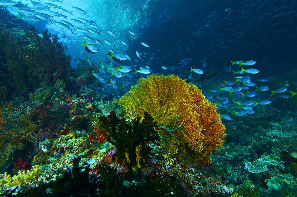 Картинки жизнь в морях и океанах