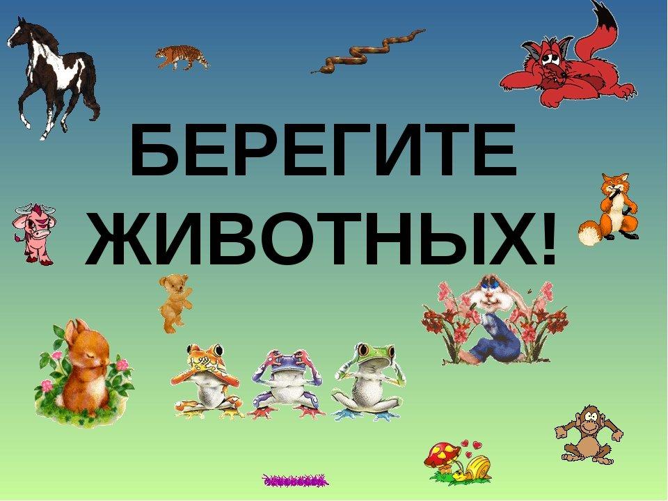 Береги животных картинки для детей