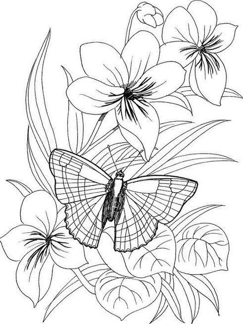 Красивые, распечатать картинки цветы и бабочки