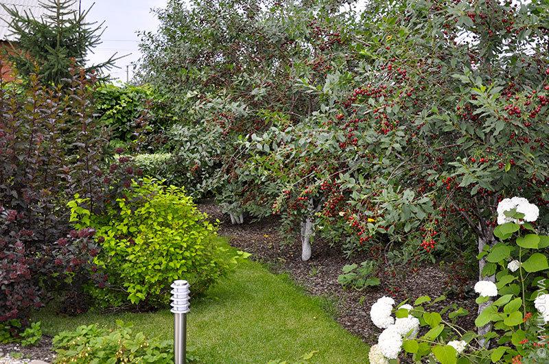 Как правильно посадить фруктовый сад фото часто
