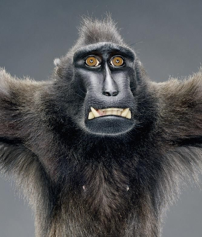 Работа приколы картинки обезьяны