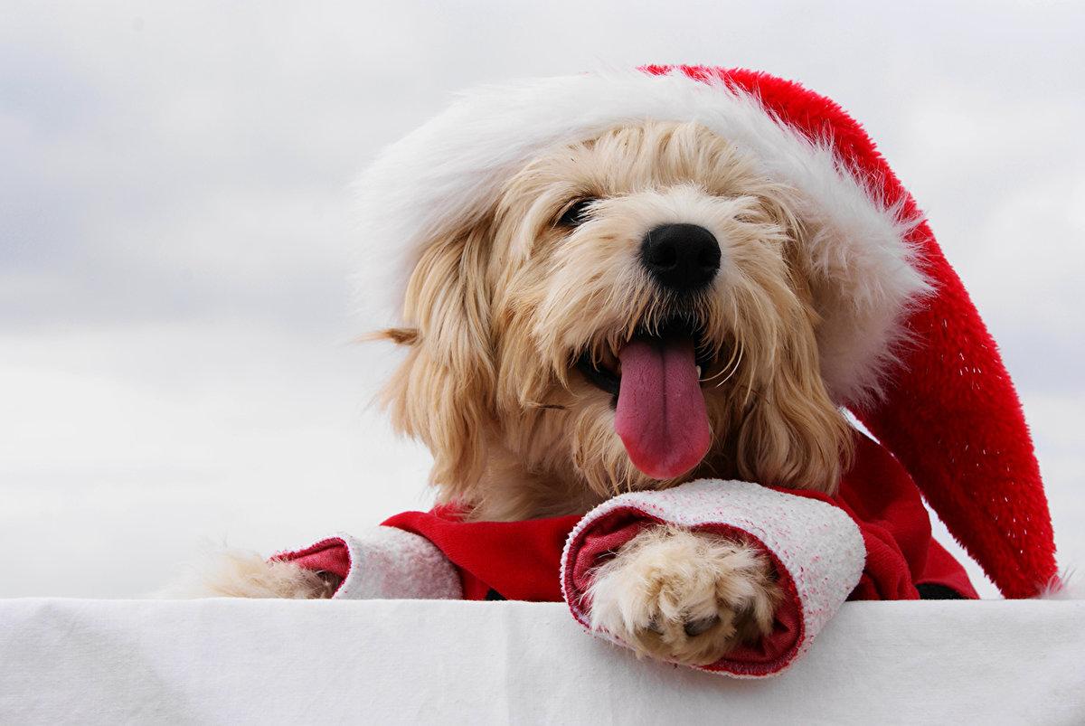 Открытки с собаками новый год