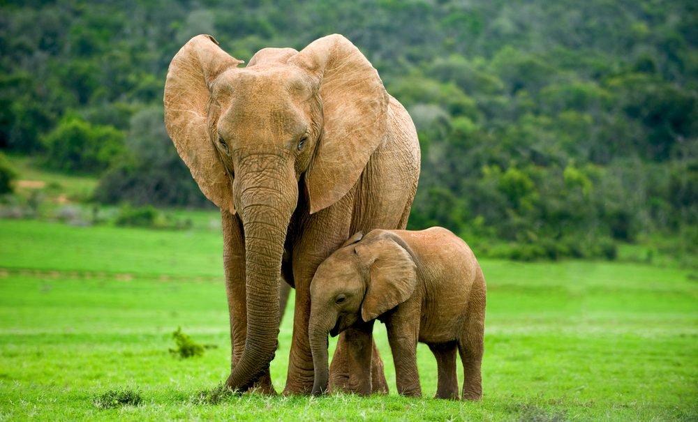 Открытка, картинки со слонами