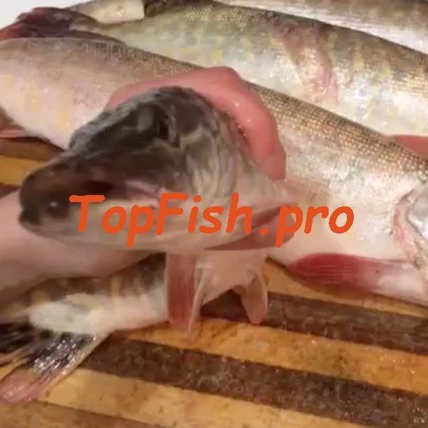 приманка fishhungry купить