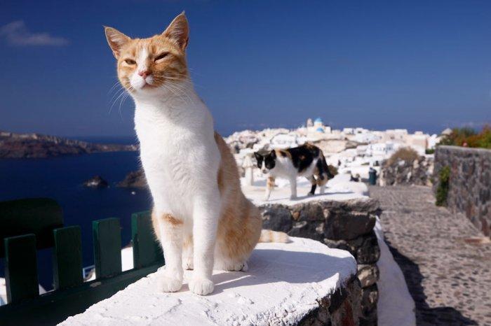 школах греческие кошки картинки колонны