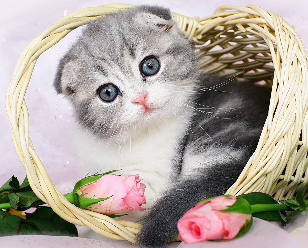 Трансформерами картинки, котенок с открытки